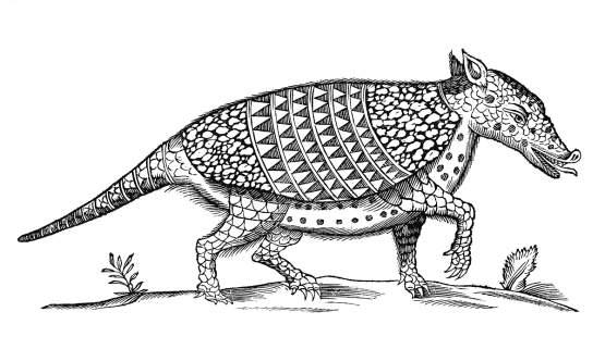 black and white illustration of an ardvark