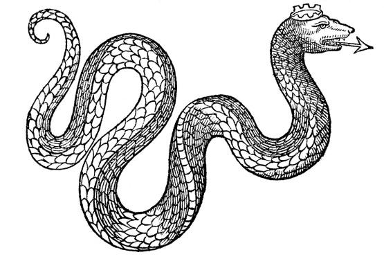 black and white illustration of snake